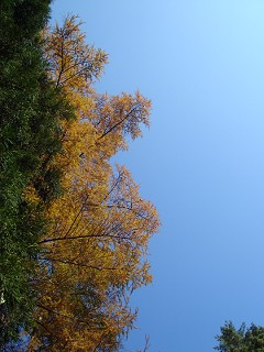 Green, Yellow, and Blue