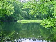 蓋沼の浮島